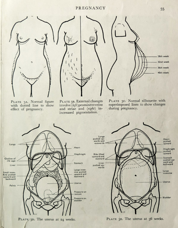 1950s-Pregnancy-Manual-for-Women--06